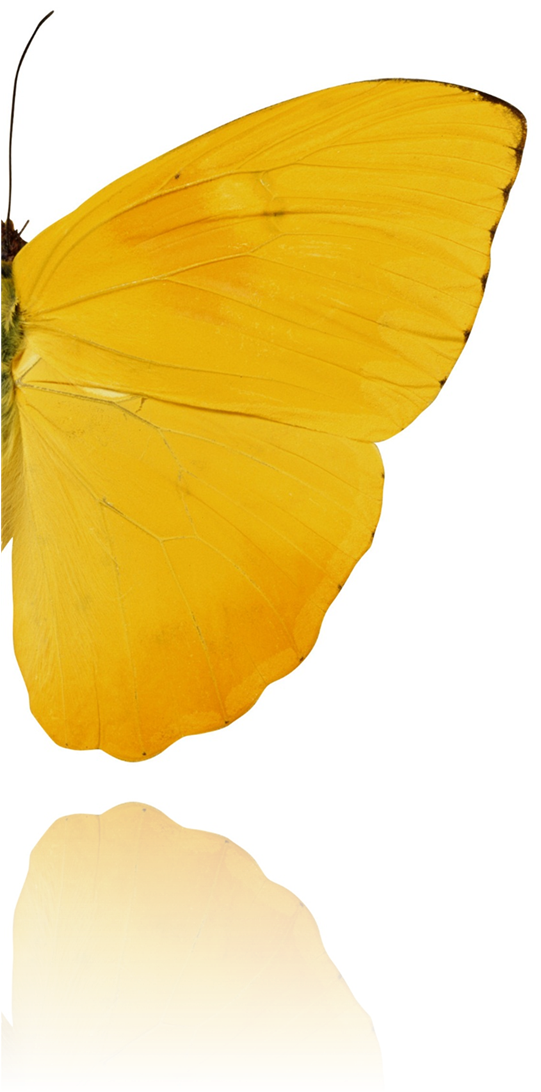 Background image of a butterfly
